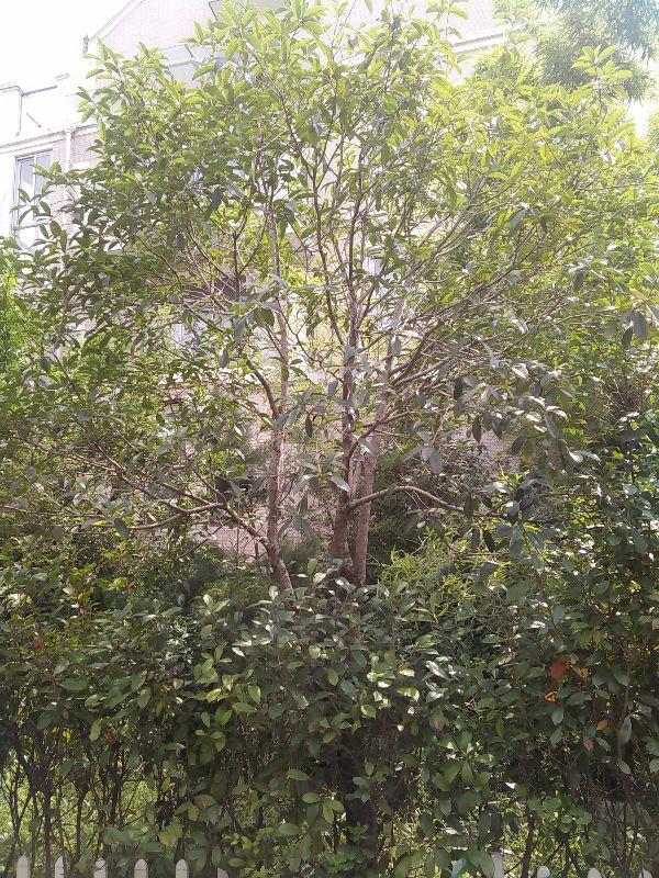 义乌江东别墅 银河湾日苑 位置佳 花园面积大