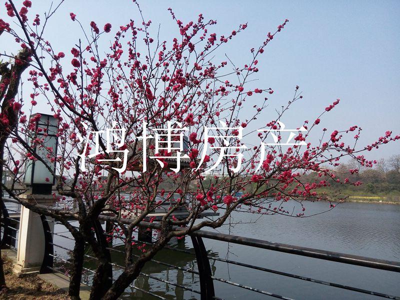 【鸿博--水木清华】大边栋+满二省税+大花园+超低价