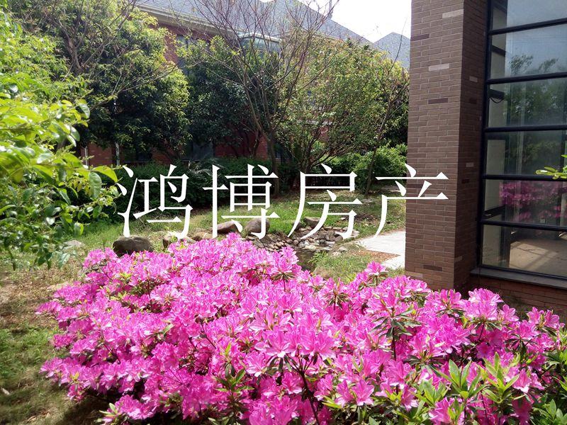 【鸿博--西景园排屋】全小区最低价438万 南边花园日照好