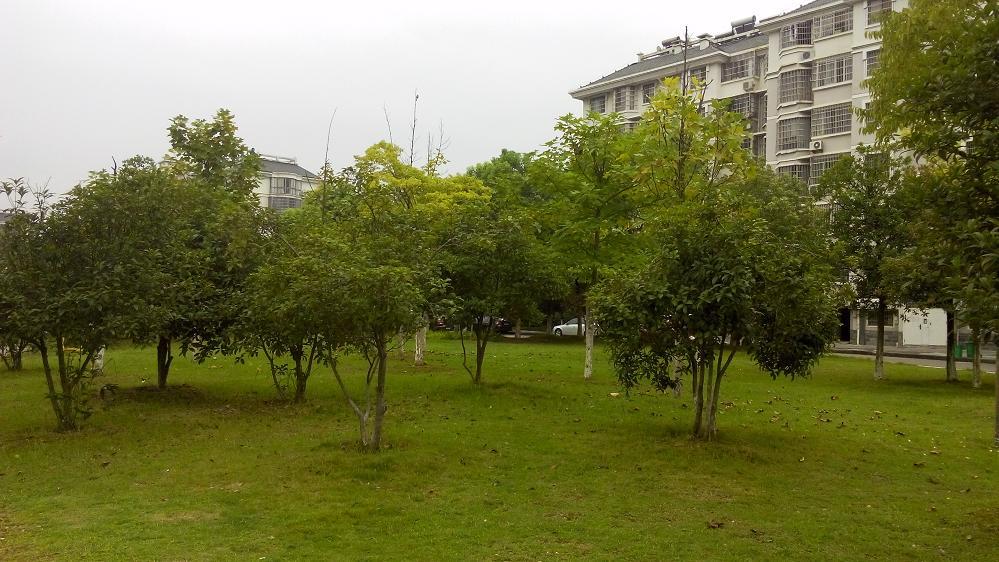 东洲花园实用三房实惠价格出售来即看有钥匙非诚勿扰